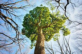 大树和天空