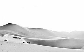 马,沙漠,单色,动物,景观,性质37084