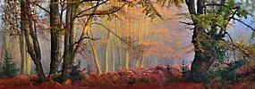 薄雾,森林,秋季,树木,太阳光线,早上,灌木,全景,景观192854