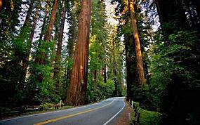 路,红杉,红木,景观,森林25147