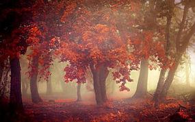 景观,秋季,薄雾,树木,早上,树叶,橙子,森林212779