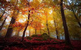 景观,森林,秋季,华美,树木,树叶,阳光,薄雾243283