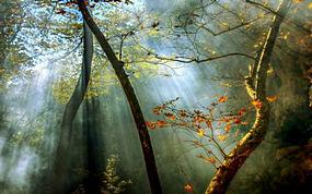 景观,森林,秋季,薄雾,太阳光线,树木,树叶245023