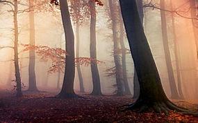 景观,森林,秋季,薄雾,树叶,树木,阳光,大气层310839