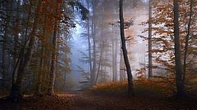 景观,森林,秋季,薄雾,路径,树木,早上,阳光,大气层328607