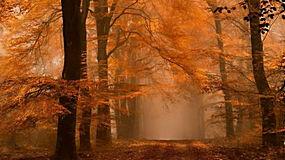 景观,森林,秋季,薄雾,路径,琥珀色,树叶,树木,大气层,阳光,早上32