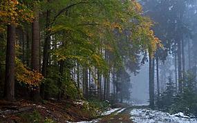 景观,森林,秋季,薄雾,雪,路径,泥路,早上,树木293648