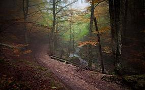 景观,森林,路径,秋季,薄雾,树木,河,大气层257592