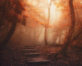 景观,森林,路径,薄雾,树木,阳光,树叶,楼梯,大气层,秋季259507