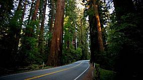 景观,路,红木207963