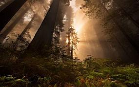 景观,红木,太阳光线,森林,树木,薄雾,蕨类植物218752