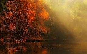 景观,河,森林,秋季,薄雾,太阳光线,树木,大气层,阳光,树叶281276