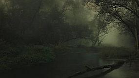 景观,河,森林,黑暗,薄雾,灌木,树木,大气层,德国325710