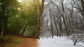 景观,树木,雪,冬季,拆分视图,弹簧,森林,照片处理,泥路,树叶,Phot