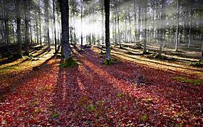 景观,太阳光线,森林,树叶,秋季,薄雾,树木,苔藓272153