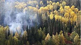 景观,树木,森林,秋季,薄雾,西伯利亚,俄国,鸟瞰图,松树582232