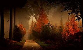 森林,路,秋季,薄雾,树木,树叶,景观,灌木,草296237